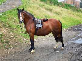 Section C 13hh Mare. Project. Open to Offers.