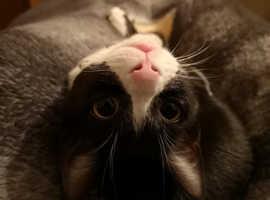 Kitten for loving home