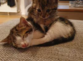 Kittens for sale (1 left)