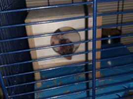 2 baby girl rats