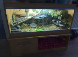 Baby leopard and horsefield tortoise for sale complete with setup