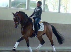 SUPER CLASSY BUT SASSY DRESSAGE HORSE.
