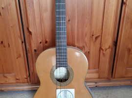Angelica guitar.