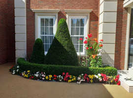 Garden services London area grass cutting hedge trimming general garden tidy