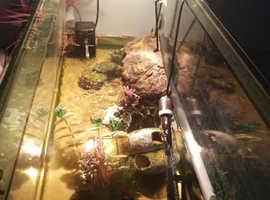 X2 musk turtles