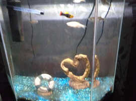 6 fishes for sale - along with aquarium.
