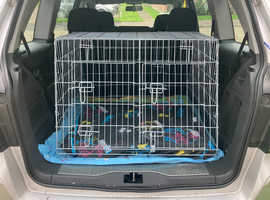 Double travelling dog cage