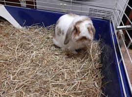 Bunny Needs a Loving Home