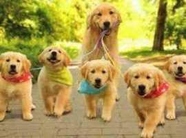 The Trusty Dog Walker
