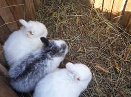 Gorgeous baby bunnies