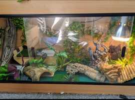 Bearded dragon setup for sale