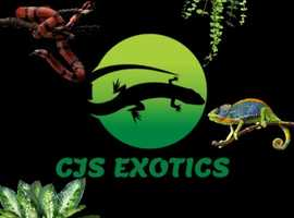 CJS EXOTICS RESCUE