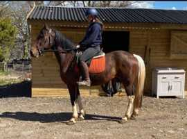 Super ride and drive gelding