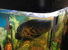 A large 275 lt Aquarium set up,complete with fish..