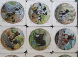 Staffordshire bull terrier plates