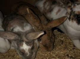 House bunnies!!!