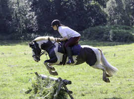 Fun and Safe 13.1hh 8 year old coloured Mare