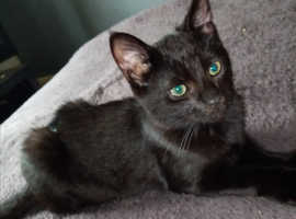 **5 MONTH OLD BLACK MALE**