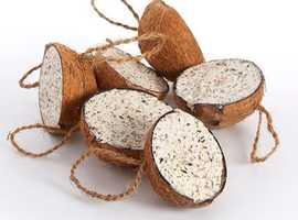 Wild Bird Filled Suet Coconuts 10 Pack