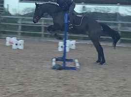 *Stunning Irish Sports Horse For Sale*