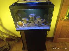 105 Litre Full  Marine setup and cabinet Aqua 800 Filter system