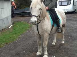 A loverly pony for loan