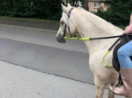 Stunning 12.2 kids pony