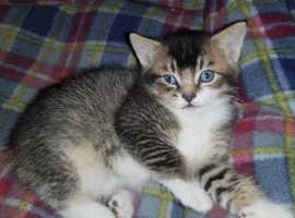 Kittens for sale,180£ each