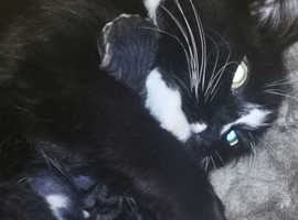 2 hairless male kittens