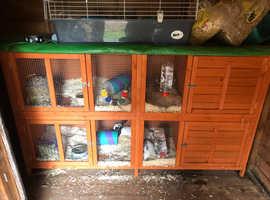 6ft rabbit hutch