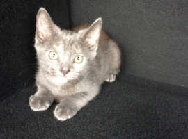 Russian blue last girl