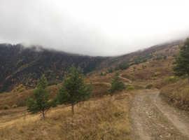 Alpine Mountain land for SALE