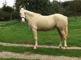 Patch Of Elegance - 3yr Old Filly