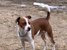 Plummer terrier boy