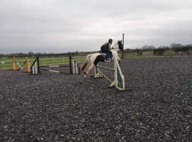15,2hh mare open to offers