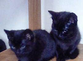 2 Cute Kittens