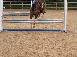 Fun forward second pony