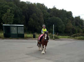 6 year old approx 13hh 1st pony