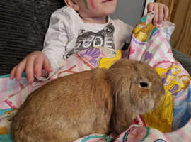 2 female sister rabbits with hutch