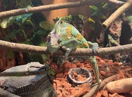 Rehoming my chameleon