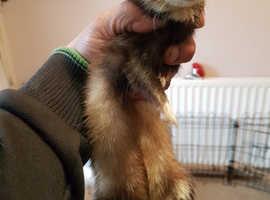 Micro ferret