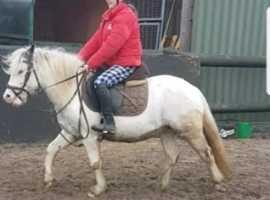 Chunky fun pony