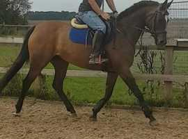 quirky but talented competition horse