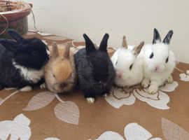 Adorable bunnies available NOW- ONLY 40