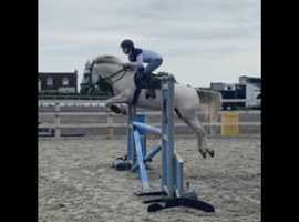 Cielo 11 year old Mare
