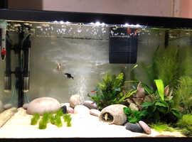64L tropical fish tank+ set up