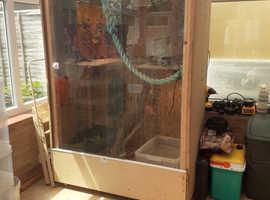 Two Iguanas with vivarium setup
