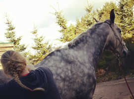 Katy Irons - Equine Sports Massage
