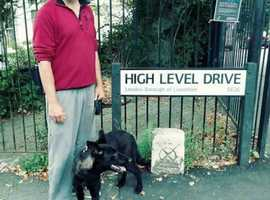 GOOD DOGGY! Practical obedience training and solutions to behavioural issues.