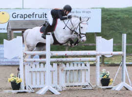 Lovely Jc pony for sale/ loan